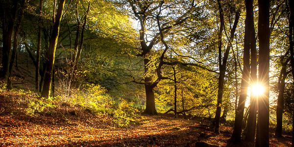 Beacon Hill Autumn