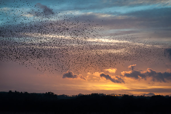 A flock flies past a wonderful sky