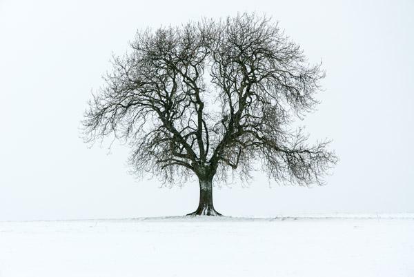 Dearleap Tree