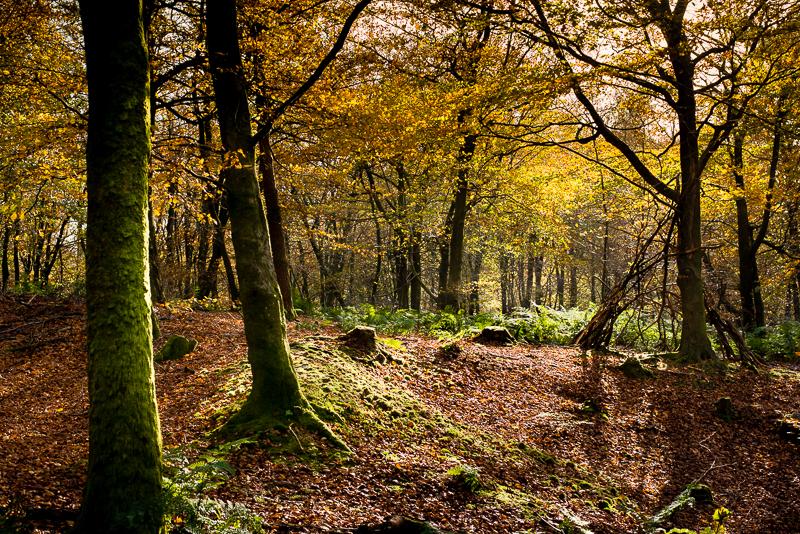 Autumn Colour  - Beacon Hill,