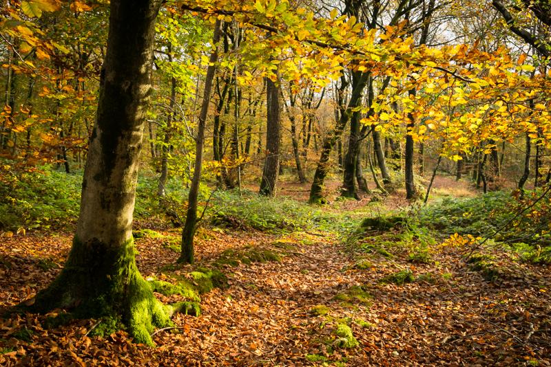 Autumn Colour - Beacon Hill Wood
