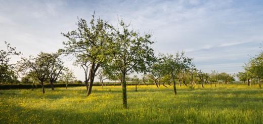 Spring Orchard - Havyatt