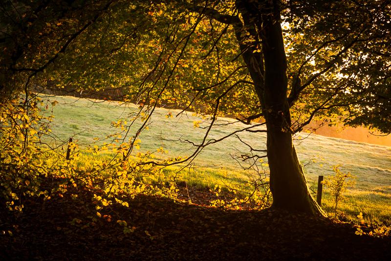 Autumn Colours - Beacon Hill Woods