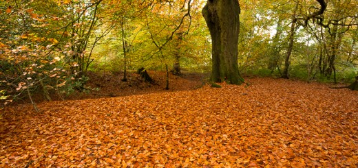 Carpet of Golden Leaves