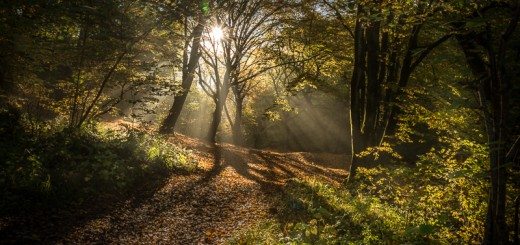 Hope Dawn - Ebbor Gorge