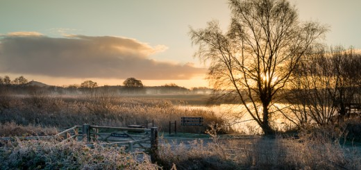 Frosty Morning at Ham Wall