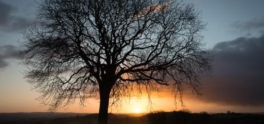 Yarley Tree 4