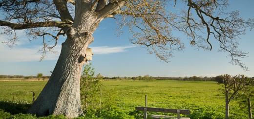 Shapwick Moor