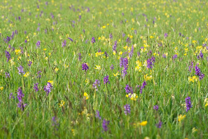 Babcary Meadows