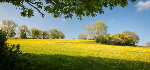Spring meadow at Westbury-sub-Mendip, Somerset