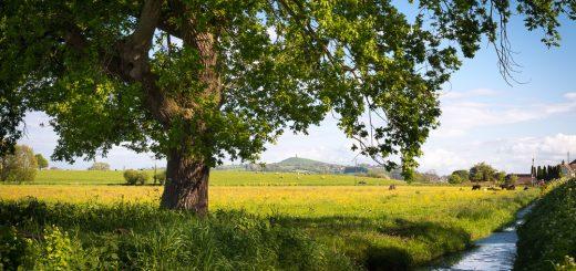 Godney Moor, Somerset