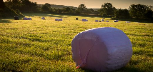 Pink Bales at Barton St David