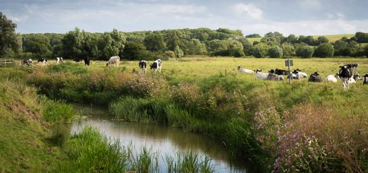 River Brue at Tootle Bridge - Barton St David, Somerset, UK.