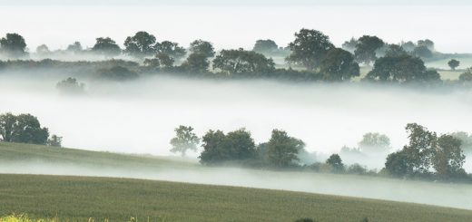 Morning Mist - Pilton, Somerset, UK.