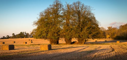 Autumn Hay Bales - Grove Cross, Nr Castle Cary, Somerset, UK. ID 808_1908