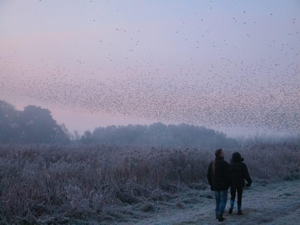 Cold morning at Westhay Heath