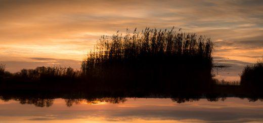 Sunset at Waltons Heath - Ham Wall, Somerset, UK. ID 808_4515
