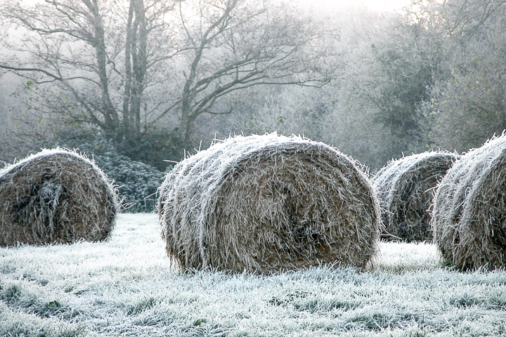 Frost on the Somerset Levels