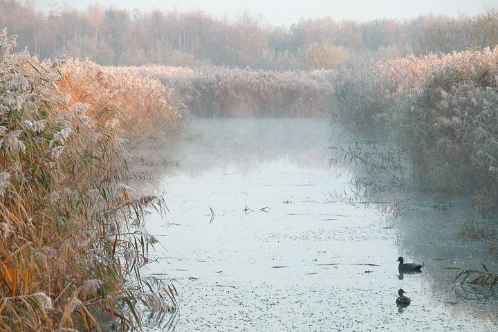 Cold morning at Westhay