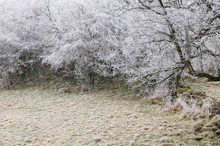 Frost on the Mendip Hills