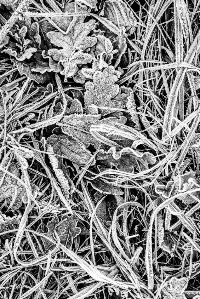 Frost at Ebbor Gorge