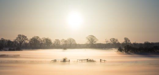 Queens Sedge Moor - Somerset, UK. ID 809_0083