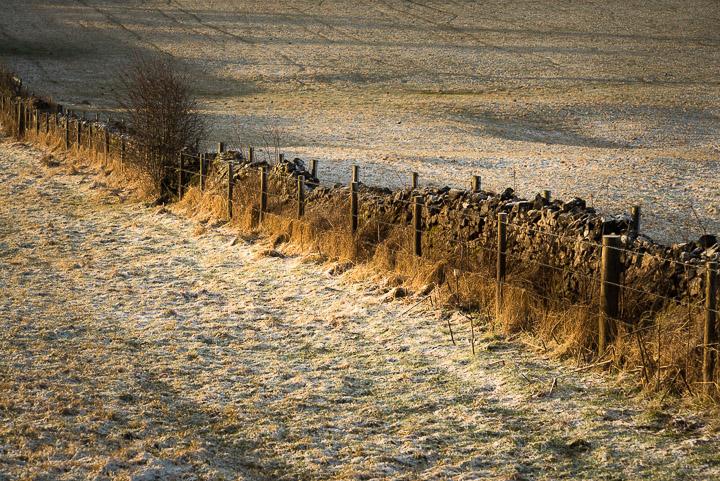 Mendip Field - Priddy, Somerset, UK. ID 809_2405