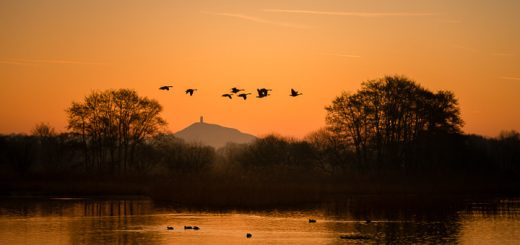 Canada geese fly over Glastonbury Tor - Ham Wall, Somerset, UK. ID 809_4461