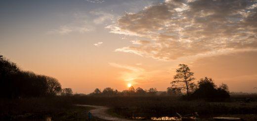 Dawn at Ham Wall - Somerset, UK. ID 809_7754