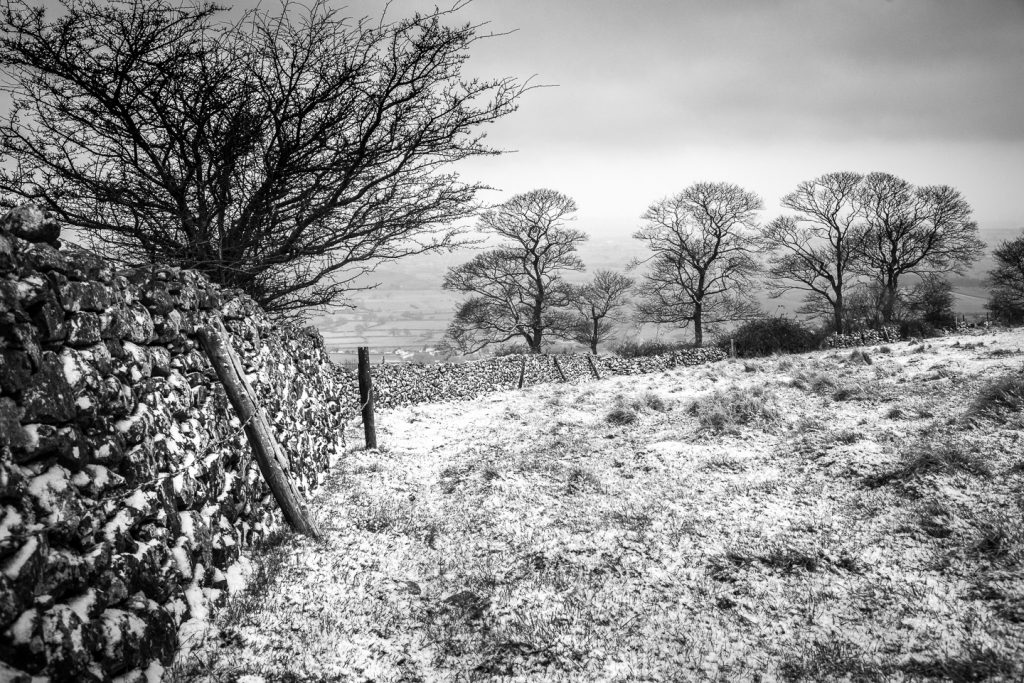 Fields trees dry stone walls and snow - Cooks Fields and Lynchcombe, Somerset, UK. ID 809_9021