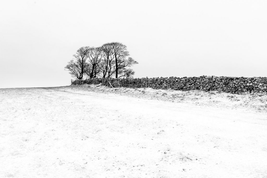 Fields trees dry stone walls and snow - Cooks Fields, Somerset, UK. ID 809_9073