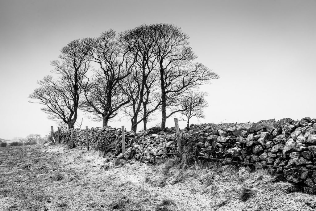 Fields trees dry stone walls and snow - Cooks Fields, Somerset, UK. ID 809_9079