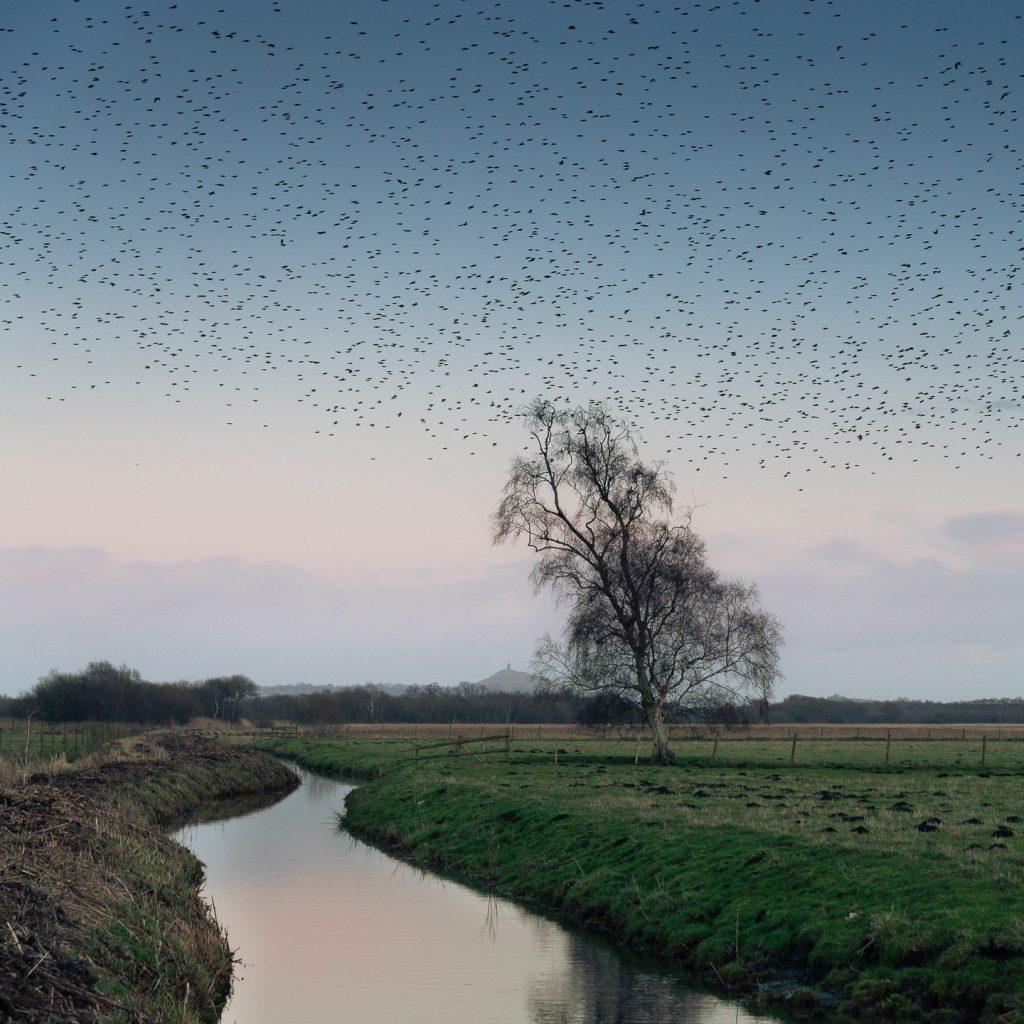 Heading to the Heath - Shapwick Heath, Somerset, UK. ID 804_0659