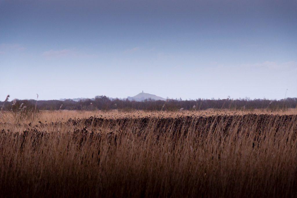 Starlings Flock - Shapwick Heath, Somerset, UK. ID 809_0713