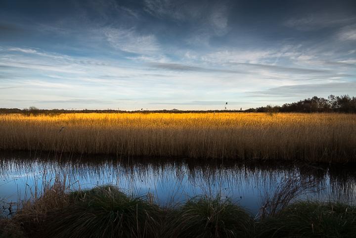 The Last Light - Shapwick Heath, Somerset, UK. ID 809_0881
