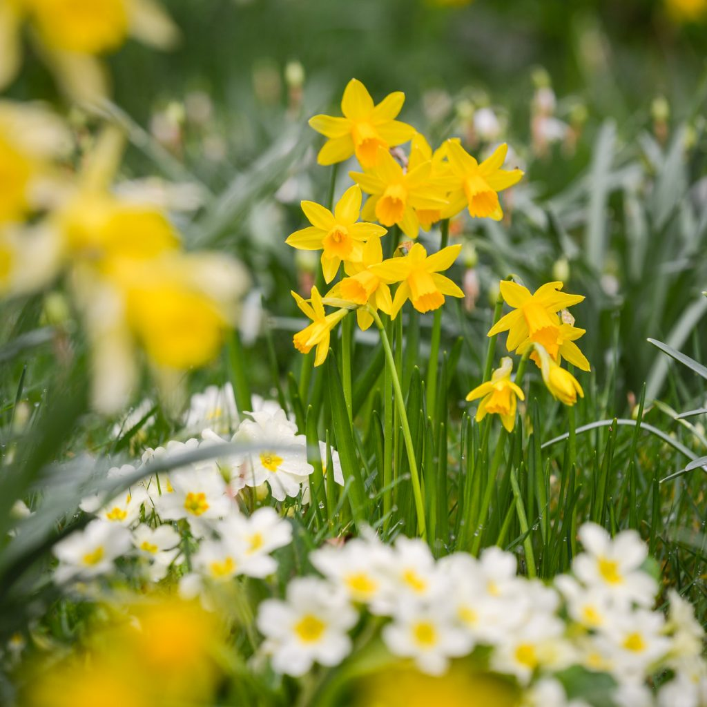 Churchyard Flowers - Bratton Seymour, Somerset, UK. ID 810_1404