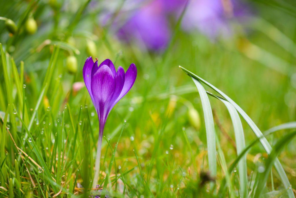 Churchyard Flowers - Bratton Seymour, Somerset, UK. ID 810_1419