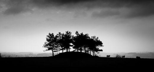 Aller Hill - Near Langport, Somerset, UK. ID 810_2881