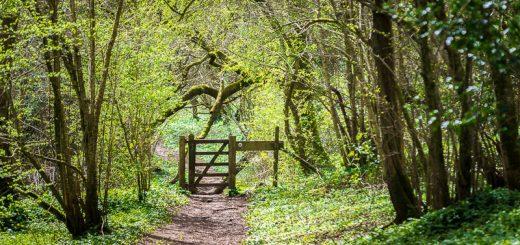 Kings Wood - Somerset, UK. ID 810_4793