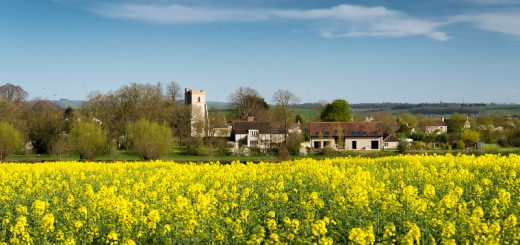 Babcary in Yellow - Somerset, UK. ID 810_5641