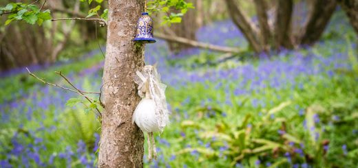 Bluebells at Steep Holm - Between Dulcote and Dinder, Somerset, UK. ID 810_7667