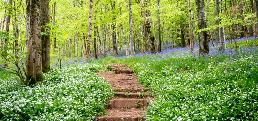 Spring in Longwood - Somerset, UK. ID 821_0461