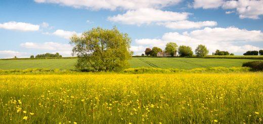 Babcary Meadows - Somerset, UK. ID 822_0660