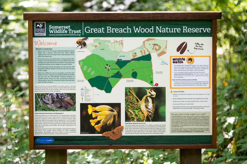 Discovery Trail - Great Breach Wood, Somerset, UK. ID 822_8741