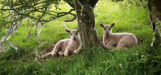 Taking shade at Lynchcombe - Somerset, UK. ID 807_5817