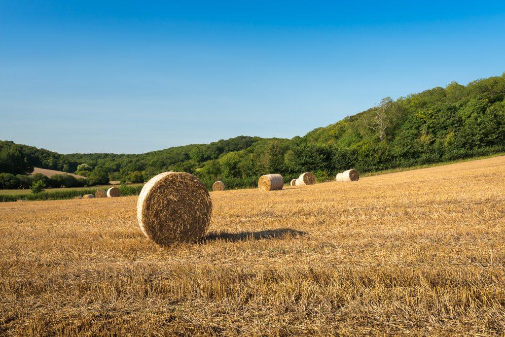 Straw Bales - Windmill Hill, Nr Somerton, Somerset, UK. ID 823_1833