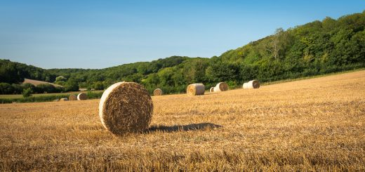 Straw Bales - Windmill Hill, Nr Somerton, Somerset, UK. ID 823_1833