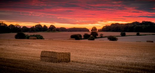Sunrise - Priddy, Somerset, UK. ID 823_3140