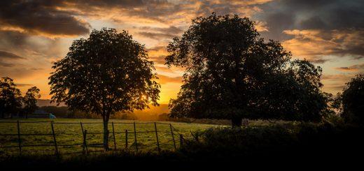 Tower Hill Sunrise - Templecombe, Somerset, UK. ID 823_3690