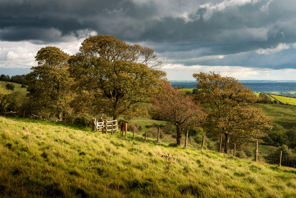 Sunshine and Showers - Lynchcombe, Somerset, UK. ID 823_3805